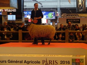 Champion antenais Bleu du Maine_Paris 2016